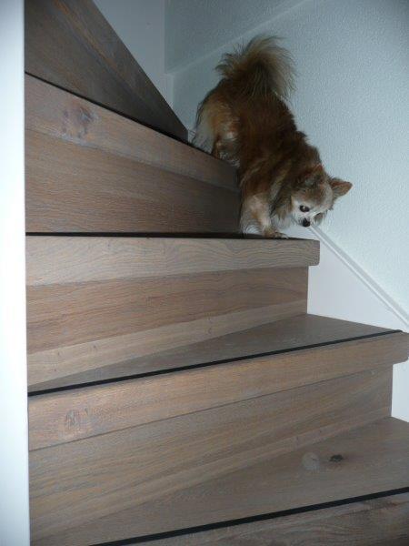 Traprenovatie-Rotterdam-met-hond2